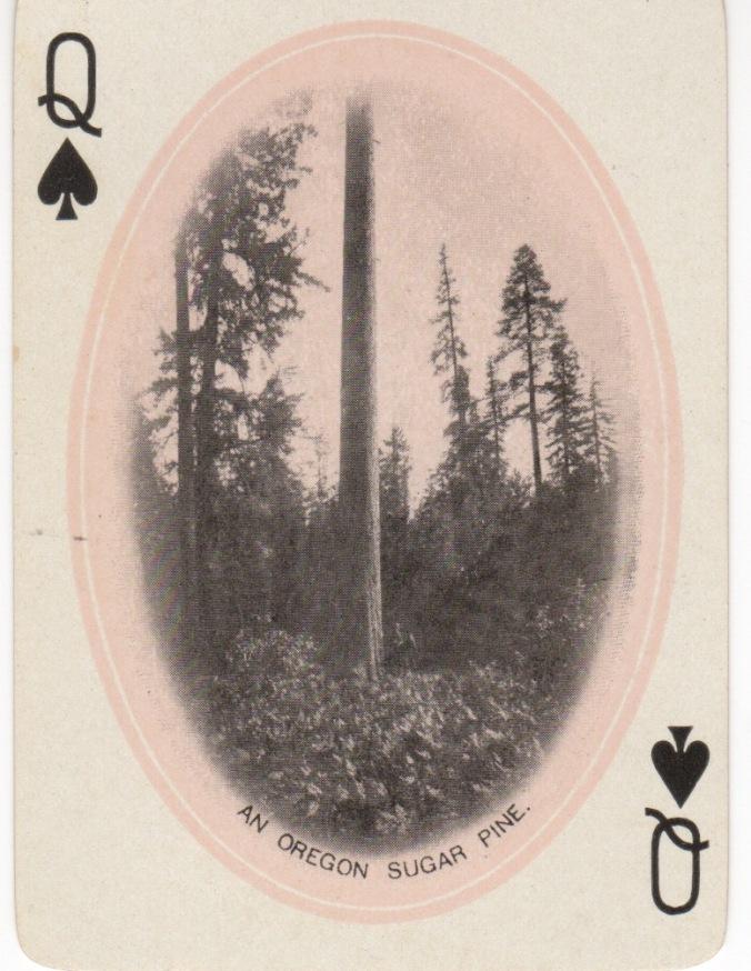 spades-queen